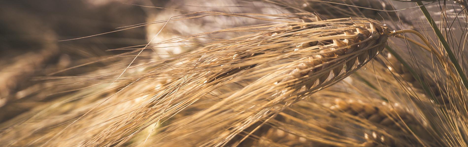 Bandi Aperti Agricoltura – 2